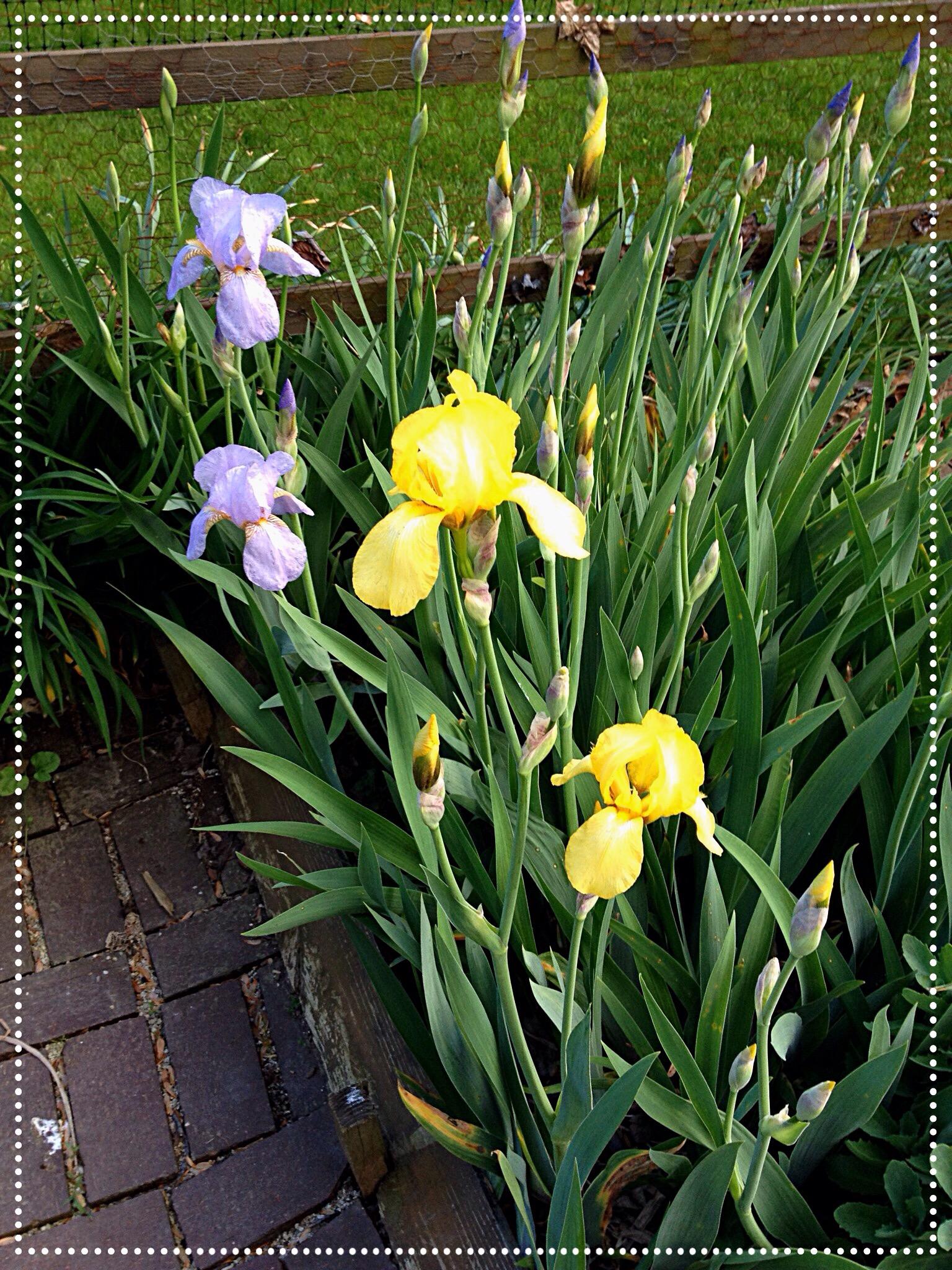 It S The Bloomin Garden A Joann