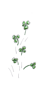 three leaf lawn clover