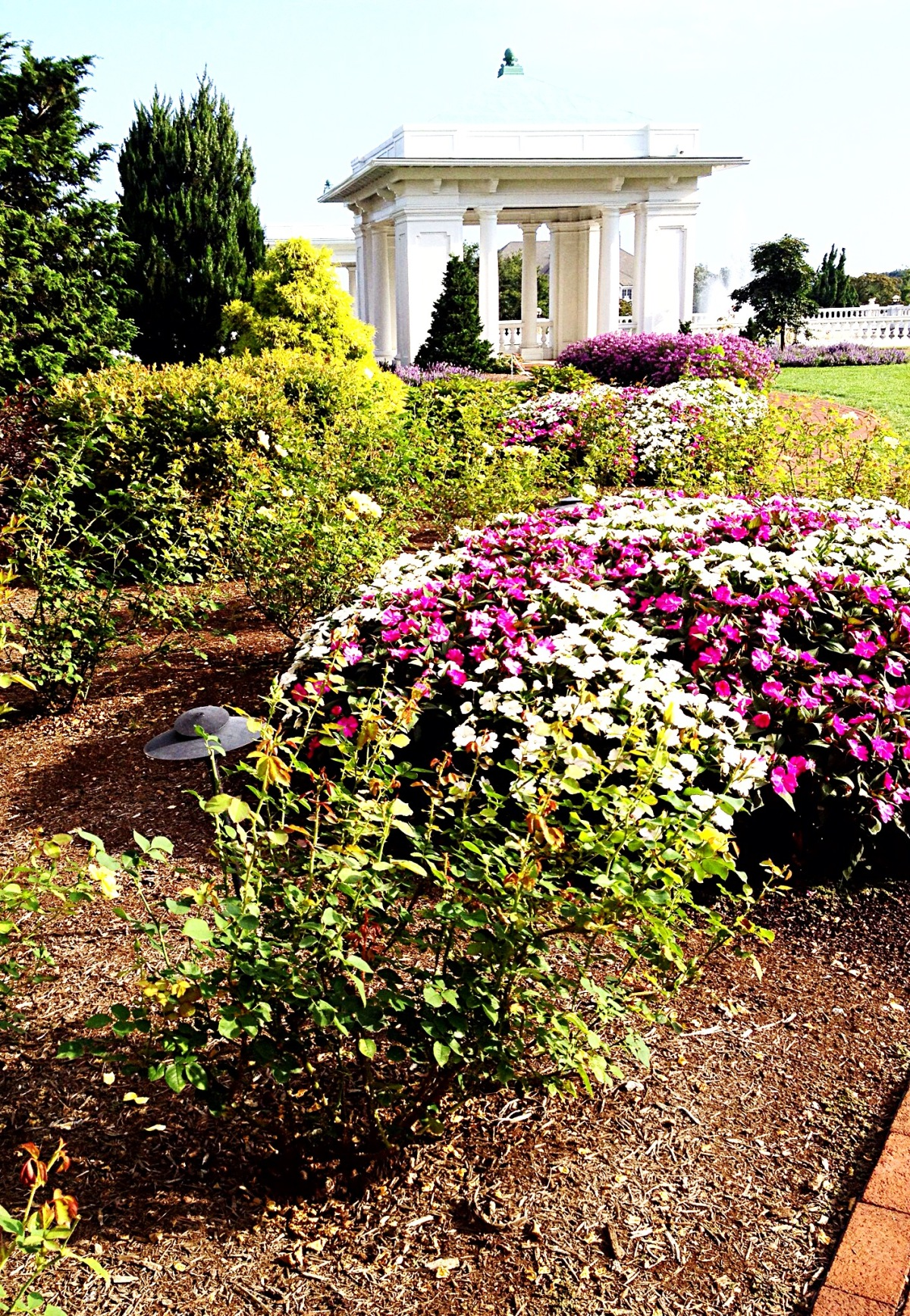 photo of flowers in the back gardens