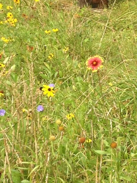 wildflowers bloom in the meadow