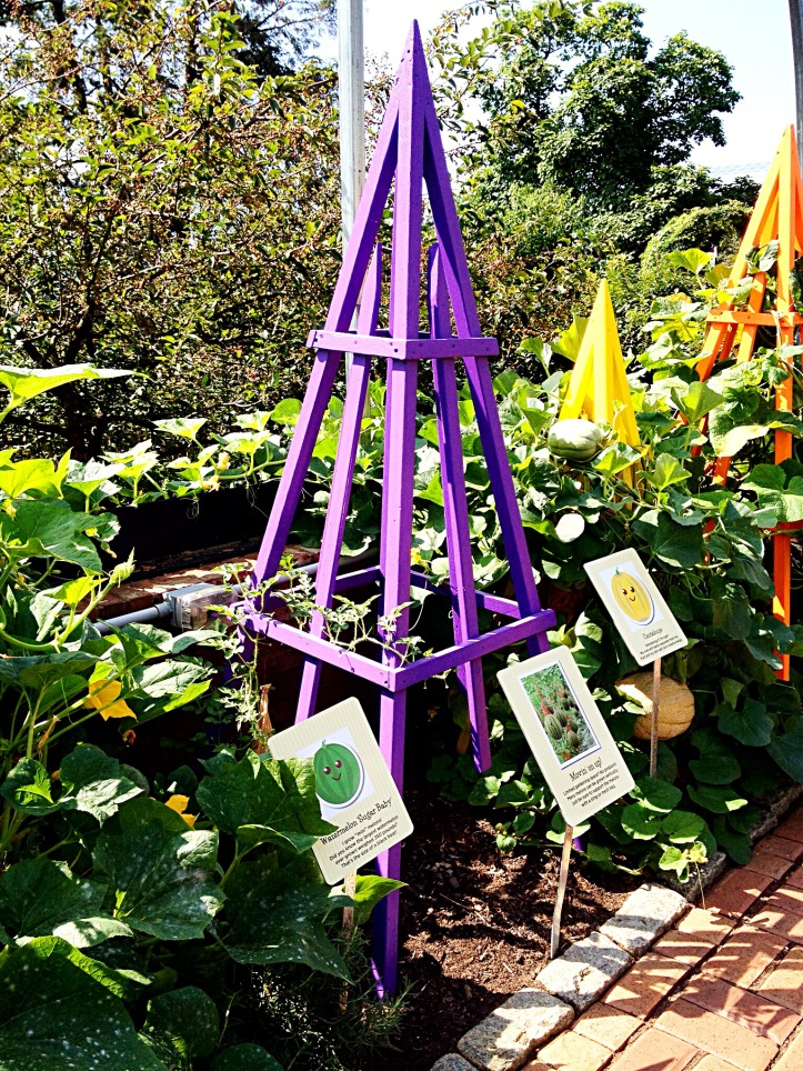 growing veggies in the children's garden