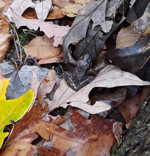 frog among leaves