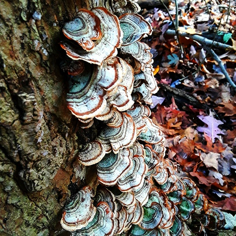 The fungi offer color and pattern.